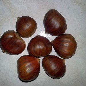 marone-esskastanie-frucht