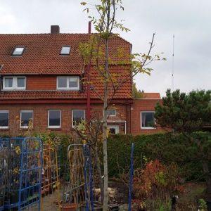 walnussbaum-hochstamm-16-18cm