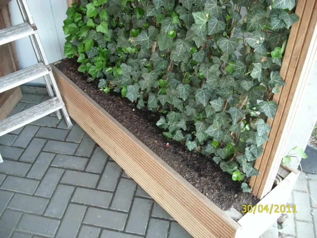 Fertighecke im Holzkübel