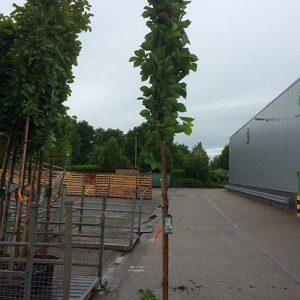 magnolie-kobus-containerware